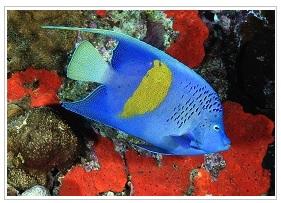 Blue fish at Blue Margouillat bar
