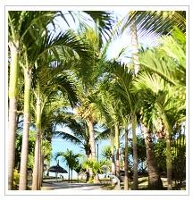 Green-Way at Veranda Palmar Beach Hotel Mauritius