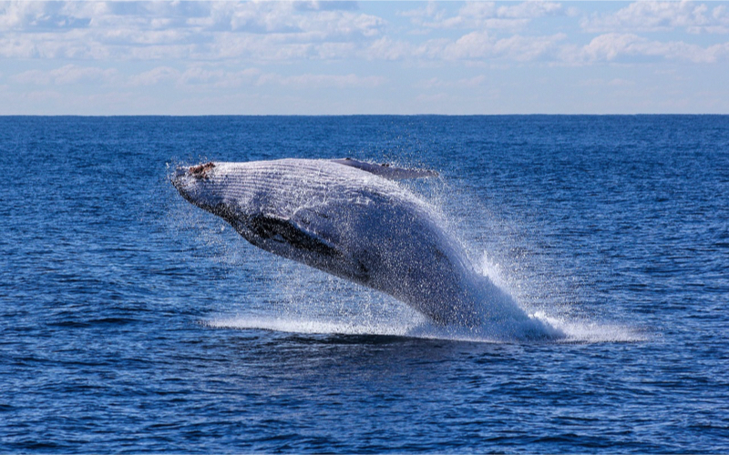 Whale seen from la reunion island