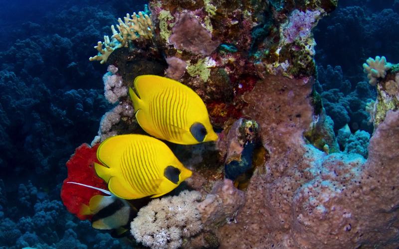 Dive Sites in Mauritius