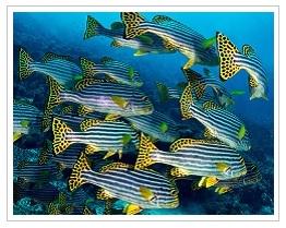 Fish at dive sites in Mauritius
