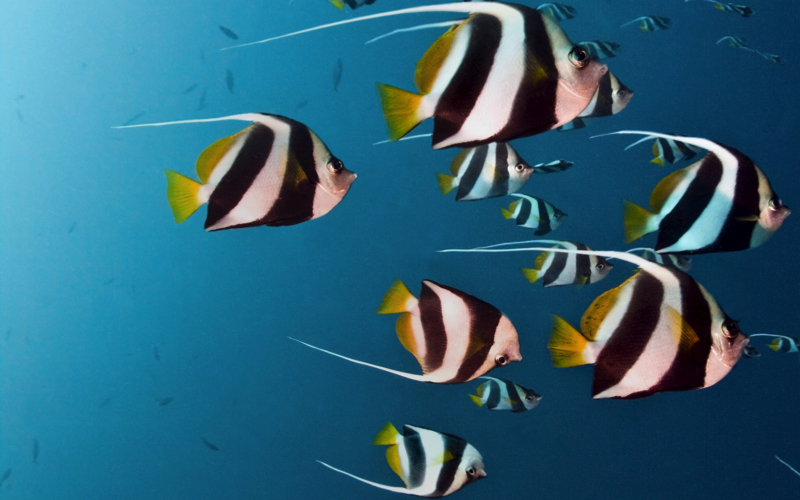 diving at Flic en Flac Mauritius