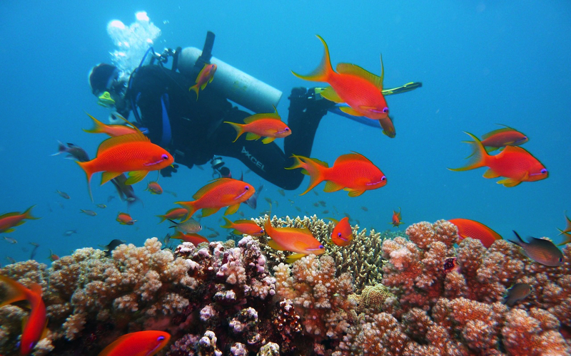 Dive sites in Mauritius - deep diving