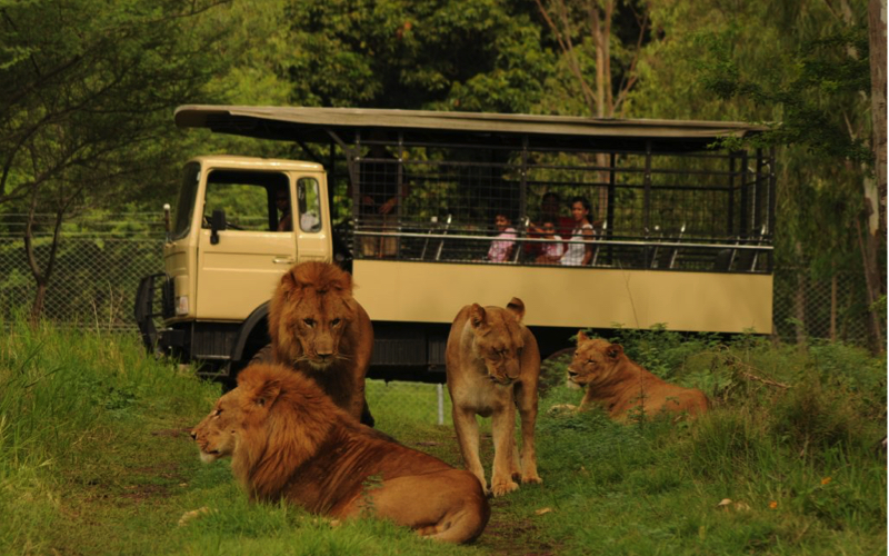 Photo safari at Casela World of Adventures