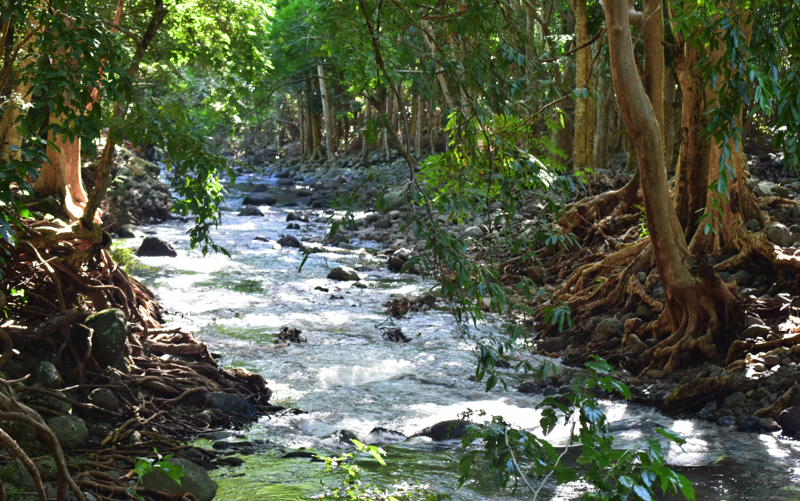 hiking in Mauritius at Black River Gorges