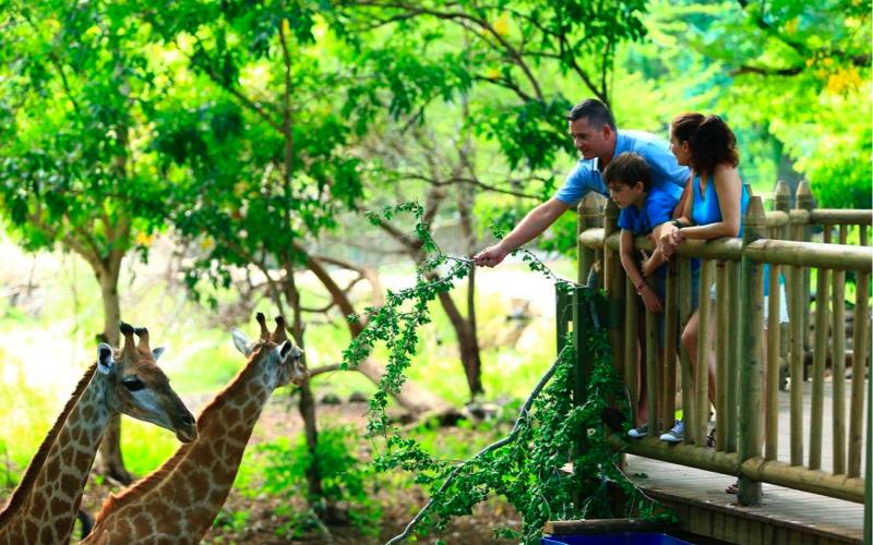 Giraffe feeding at Casela World of Adventures