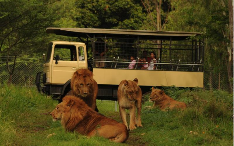 Photo safari at Casela World of Adventures