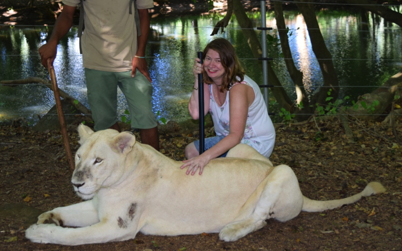 Lion Interaction at Casela World of Adventures
