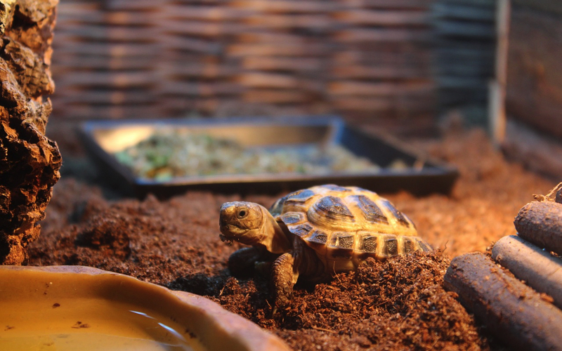 Baby tortoise in nursery at La Vanille Nature Park