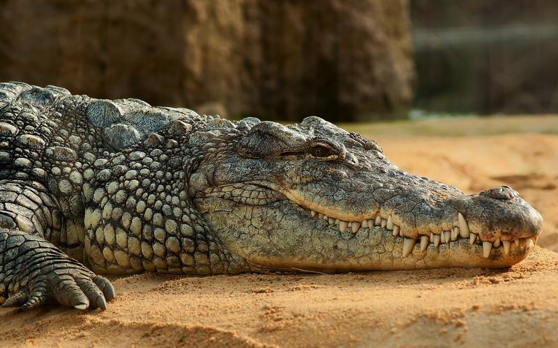Crocidle at La Vanille Nature Park