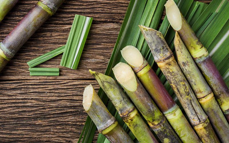 Cut Sugar Cane Stalks, Mauritius